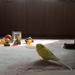 鳥フォトコンテスト「ピーチコ」さん