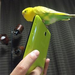 鳥フォトコンテスト「はなび」さん