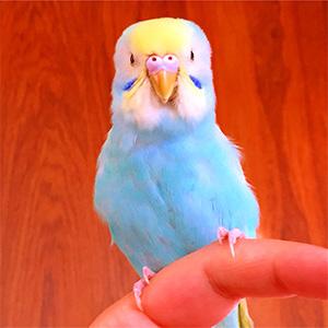 鳥フォトコンテスト「親方」さん