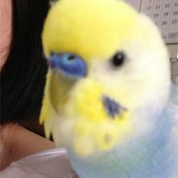 鳥フォトコンテスト「ぴぴたん」さん