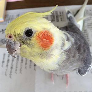 鳥フォトコンテスト「ポーちゃん」さん