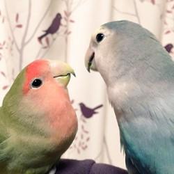 鳥フォトコンテスト「ひまり」さん