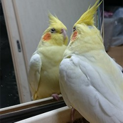 鳥フォトコンテスト「なると」さん