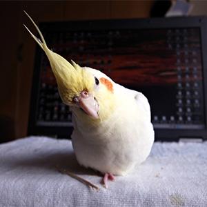 鳥フォトコンテスト「九代目ちび」さん