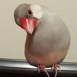 鳥フォトコンテスト「ぶんち」さん