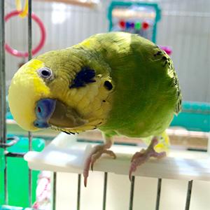 鳥フォトコンテスト「きゅんちゃん」さん