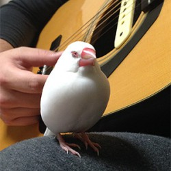 鳥フォトコンテスト「ちの」さん