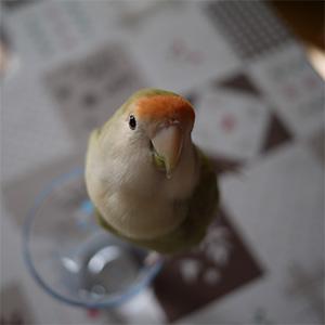 鳥フォトコンテスト「マロさん」さん