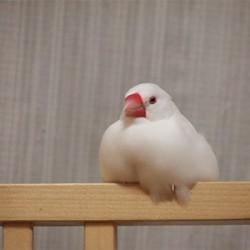 鳥フォトコンテスト「春」さん