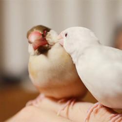 鳥フォトコンテスト「ムギ・ましろ」さん