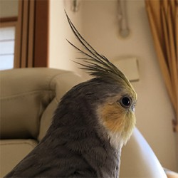 鳥フォトコンテスト「助六」さん