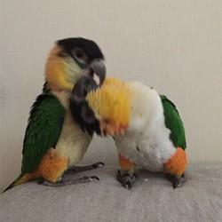 鳥フォトコンテスト「文太・桜」さん