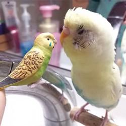 鳥フォトコンテスト「夏樹くん」さん