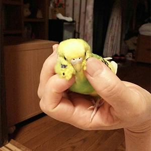鳥フォトコンテスト「ぱみゅ」さん