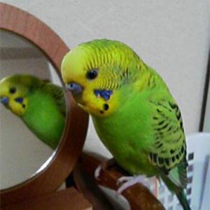 鳥フォトコンテスト「リーフ」さん