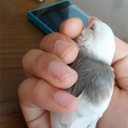 鳥フォトコンテスト「こゆき」さん