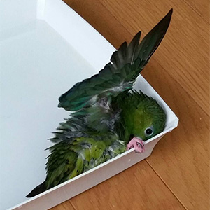 鳥フォトコンテスト「たっつ」さん