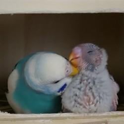鳥フォトコンテスト「みかも&ひびー」さん