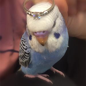 鳥フォトコンテスト「ピピ」さん