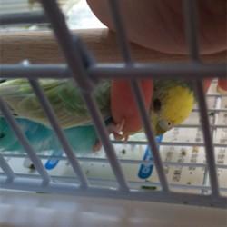 鳥フォトコンテスト「ポテト」さん