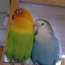 鳥フォトコンテスト「柚子・ジュビア」さん