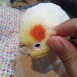 鳥フォトコンテスト「壽」さん