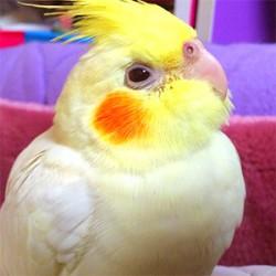 鳥フォトコンテスト「チャーリー」さん