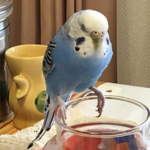 鳥フォトコンテスト「こん」さん